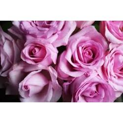 Eau florale de rose de Damas Bio