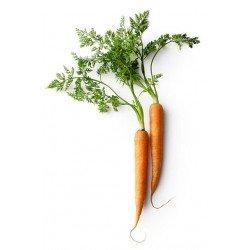 Eau de carotte