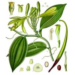 Huile essentielle de vanille de Madagascar